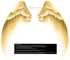 Arch Angel Wings - Golden by Thy-Darkest-Hour