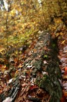 Autumn Log by TrappedChild