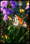 Butterfly View 03 by buildingclimber
