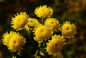yellow flower4 by a6-k