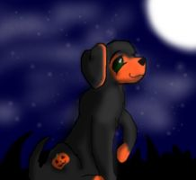 Pumpkin Puppy Webkinz by Wetstream