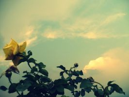 Yellow Beauty by DeLiiaMCR