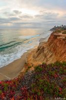 Carlsbad Gold by AndrewShoemaker