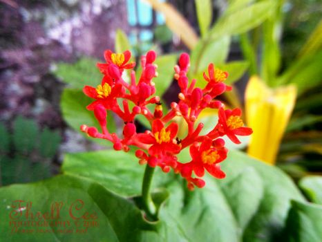 Flowers  16001 - Mini Red by avaritico