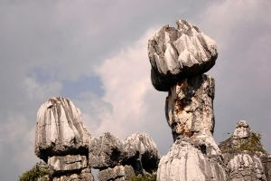 Stone Forest - 1 by wildplaces