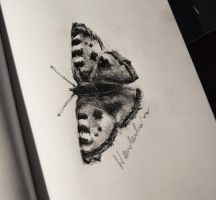 Day 6: a butterfly by Szura69