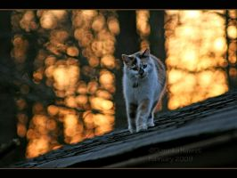 Rooftop Kitty by Goodbye-kitty975