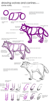 Notes on How to Draw Wolves and Canines by Ferox-Auru