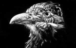 Bird on scratch board by illogoi