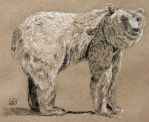Bear 01 by WillWorks