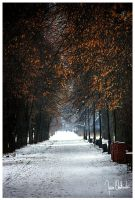 Winter Walk by kokia