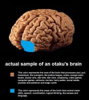 actual sample of an otaku's brain by Agathanaomi