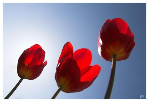 Spring return 1 by salviphoto