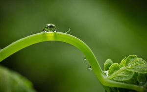 A Drop Of Life by godylins