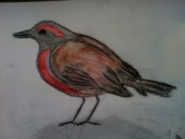 Bird Sketch Colored by Stone-Cold-Stone