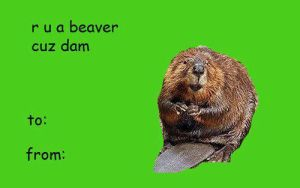 r u a beaver by guilts