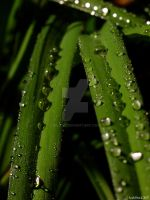 Lily Leaves I by zieora
