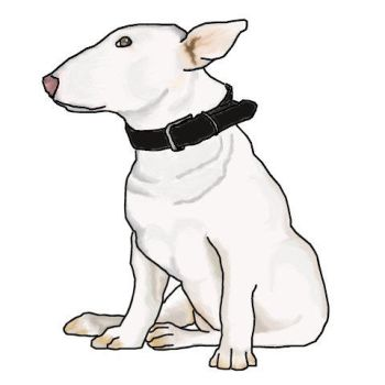 Bull terrier by Myhecate