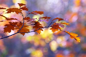 United Colours of Autumn by thrumyeye