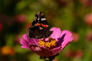 Butterfly by Fade--To--Black