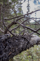 Gnarled Branch by oddmountain