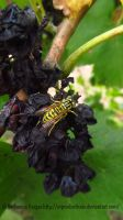 Vineyard Bee by SVProductions