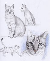 cat study by mr-1up