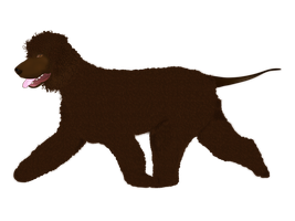 Water Spaniel by Lucora