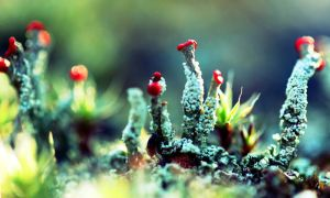 Lichen Spores by myntaphoto