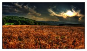 CornField On Sunset by miki3d