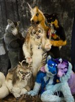 2013.05 Beastcub Suites at blfc by SpottacusCheetah