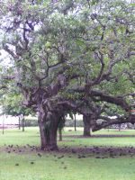 ms18-monster tree by mystify-stock