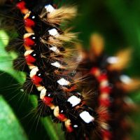 Pair of caterpillars by SteamPixie