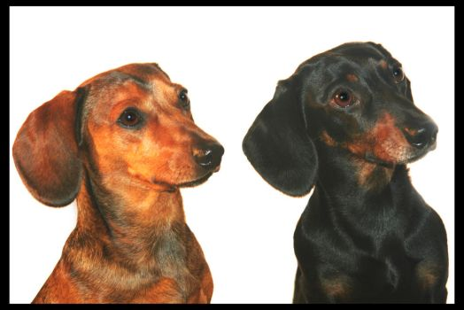 Rudi and Diesel by GeckoHippy