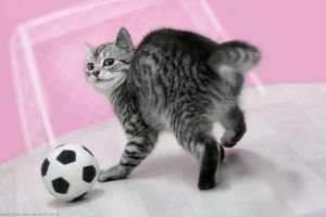 Soccer kitty by hoschie