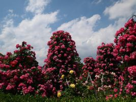 JAPAN STOCK FLOWER PLANT NO:040030246 by hirolus