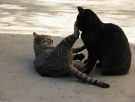 A cat play 1 by Sanae78