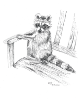 Raccoon drawing - Day 2 of Inktober 2015 by Wenchkin
