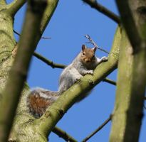 Squirrel stock 4 by Random-Acts-Stock