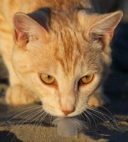 Ginger cat on beach by westcoastwitch