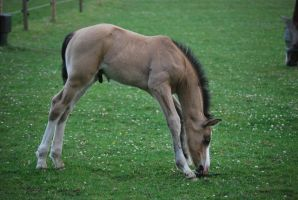 Foal Stock 16 by equinestudios