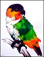 Painting-The Black-headed Parrot by Ennete