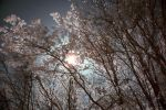 Sun Through Trees by Mithertiths
