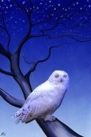 Snowy Owl by wildpaintings