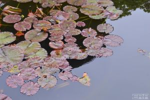 Pond by Gamble55