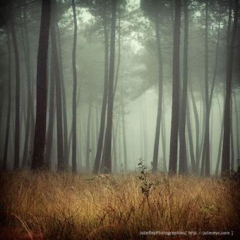 Forest... by julie-rc