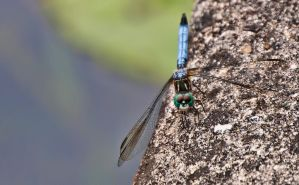 DragonFly by cmykchicago