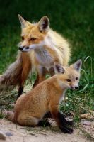 Mother And Cub IV by Sagittor