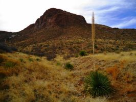 Yucca on the Foothills by SharPhotography