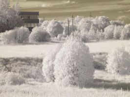 Infrared by diskis